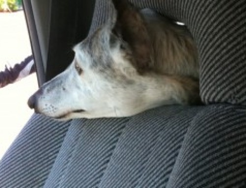 I'm Riding in Your Car